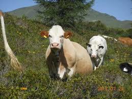 Osttirol auf einer Almhütte: Winterurlaub auf dem Bauernhof